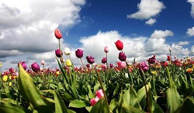 פרחים2
