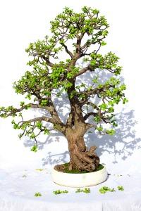 בראל - עץ הקיום